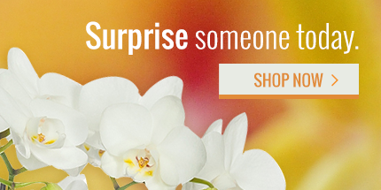 Buy Orchids Online