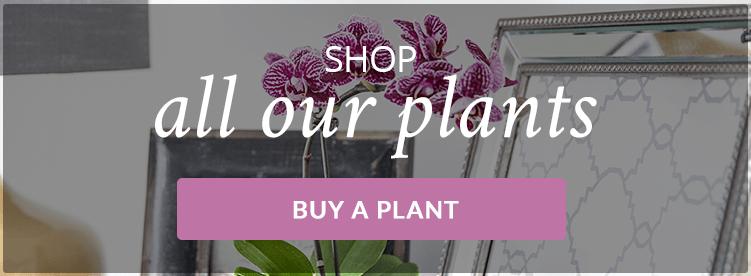 Buy-Indoor-Plants-Online