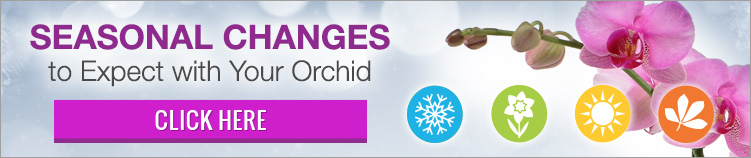 Download the Seasonal Changes to Expect with Your Orchids Guide
