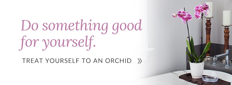 Treat yourself to an orchid today!