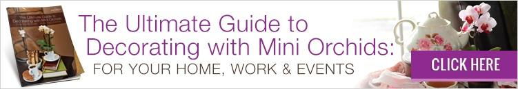 Download our guide and learn how to decorate with mini orchids