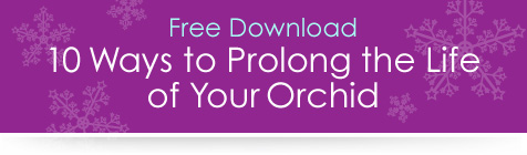 Prolong the Life of Your Orchid Free Download
