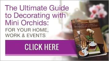 Download our free guide about how to decorate with mini orchids