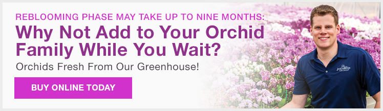 Why not add to your orchid family while you wait?