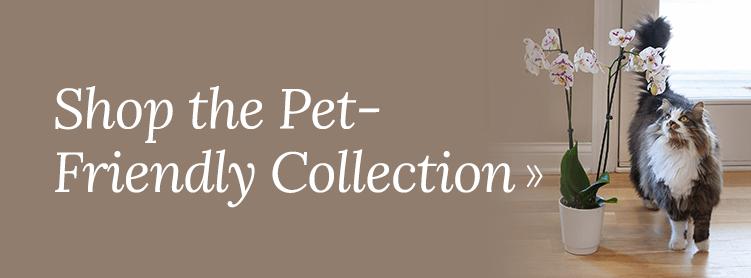 Shop Our Pet-Friendly Collection