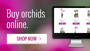 Our new specialty orchids delivered - Shop from home!