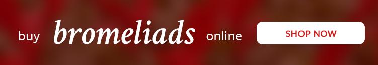 buy-bromeliads-online