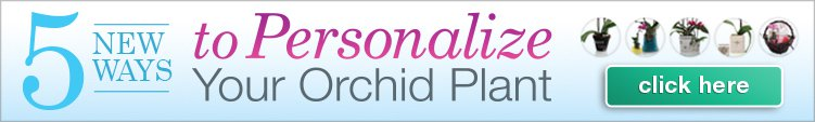 5 Ways to Personalize Your Orchid Plant
