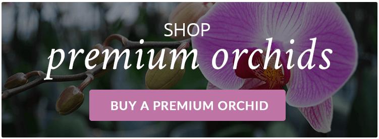 Buy-Premium-Orchids-Online