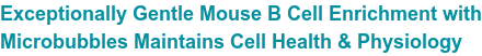 Exceptionally Gentle Mouse B Cell Enrichment with Microbubbles Maintains Cell Health & Physiology