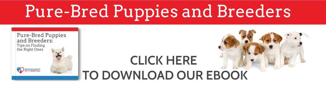 Purebred puppies and breeders