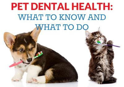 Pet Dental Health, What to know and what to do