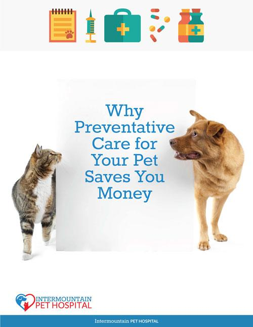 Why Preventative Pet Care Saves you Money