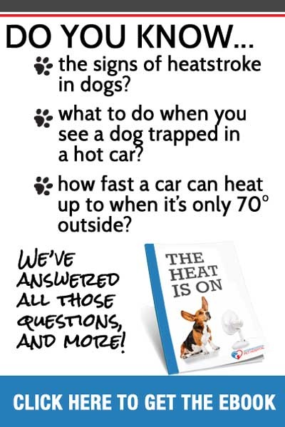 Your dog, and signs of heatstroke