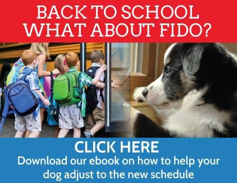 What will you do with your dog when the kids are in school.