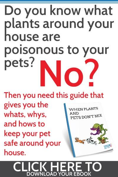 Harmful Plants to Pets