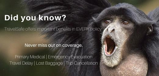 A monkey shouting getting travel insurance quotes today.