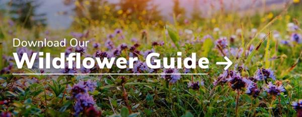 Download Our Wildflower Guide