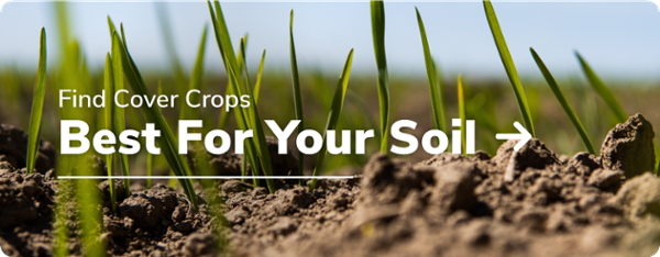 Find Cover Crops Best For Your Soil