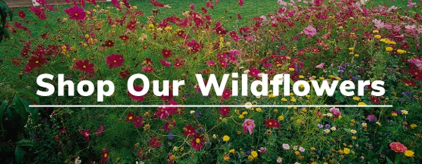 Shop Our Wildflowers