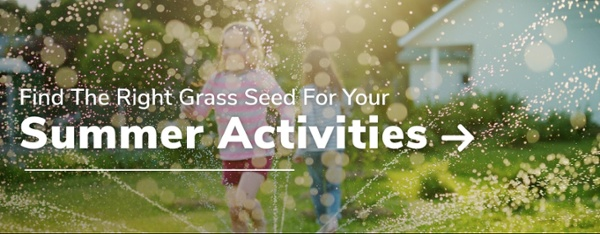 Find The Right Grass Seed For Your Summer Activities