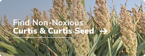 Find Non-Noxious Curtis & Curtis Seed