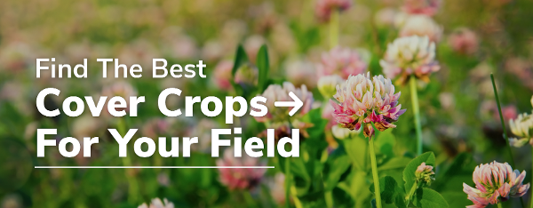 find cover crops