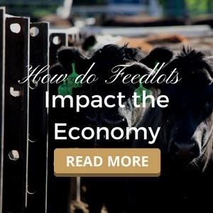 How do Feedlots Impact the Economy?