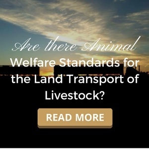 Are there Animal Welfare Standards for the Land Transport of Livestock?