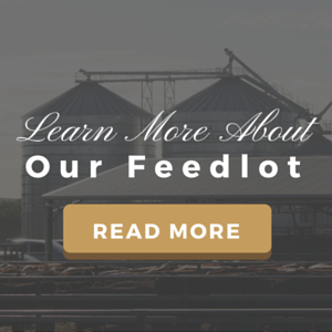 Learn More About Our Feedlot