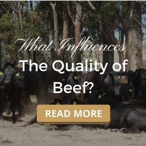 What Influences the Quality of Beef?
