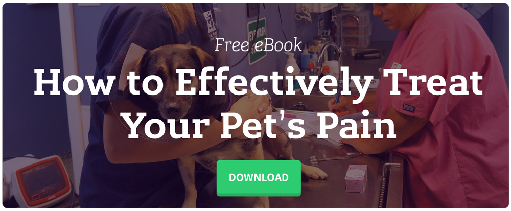 How to Effectively Treat Your Pet's Pain