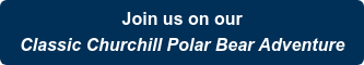 Join us on our Classic Churchill Polar Bear Adventure