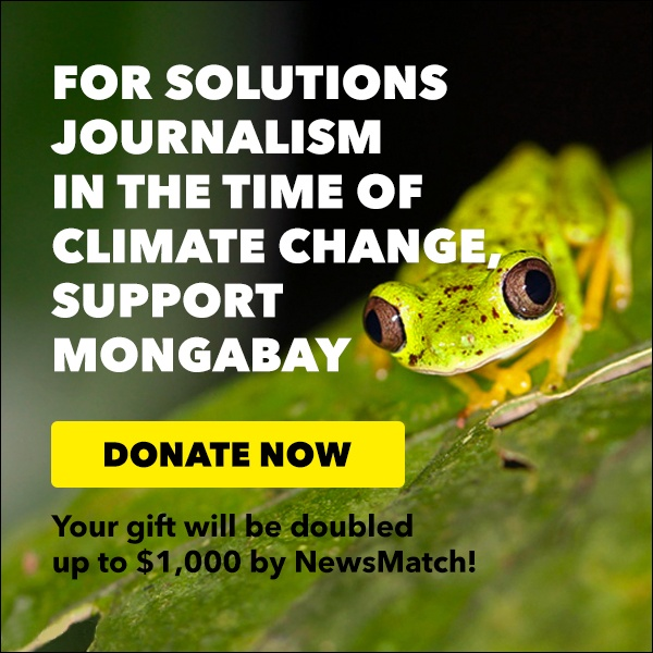 Like solutions journalism? Donate to Mongabay.
