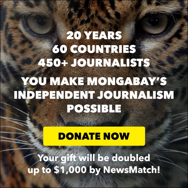 Like environmental journalism? Donate to Mongabay.