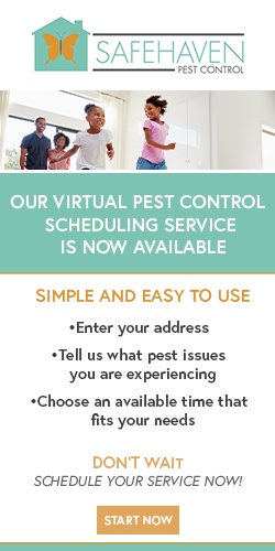 Pest Control Dallas