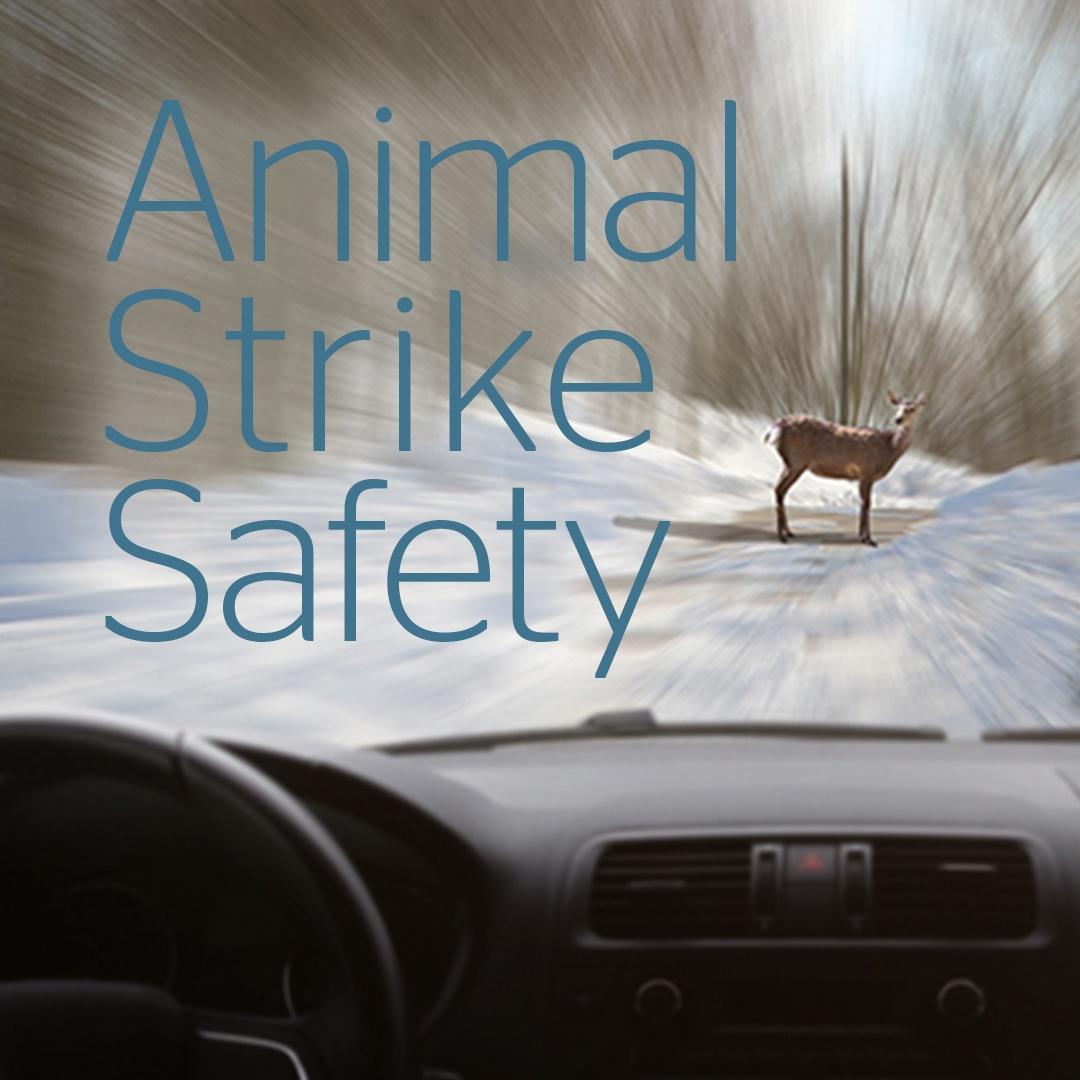 animal-strike-safety-while-driving