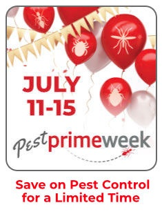the daily pest blog
