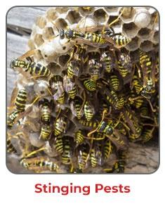 Stinging Pests NJ MD DE PA