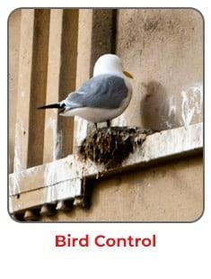 Bird Control Experts | Viking Pest Control