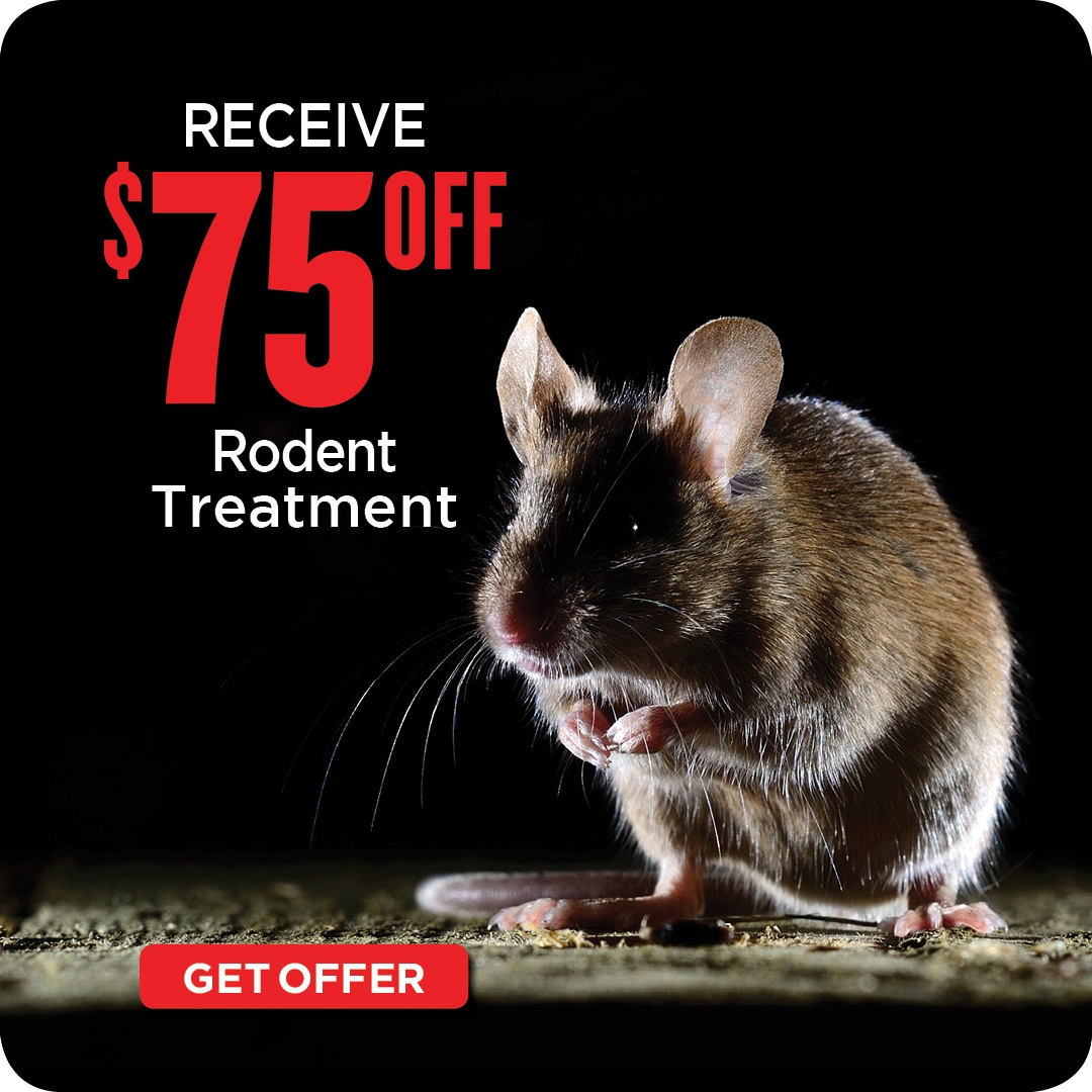 $75 Off Rodent Treatment