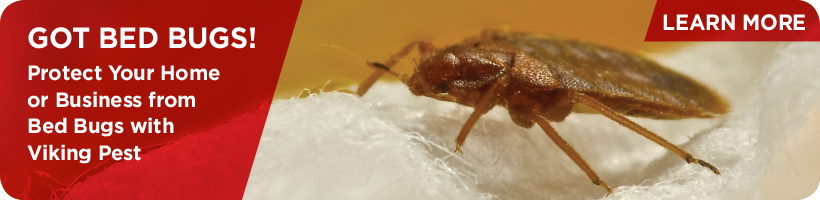 Bed Bugs Removal | Viking Pest Control