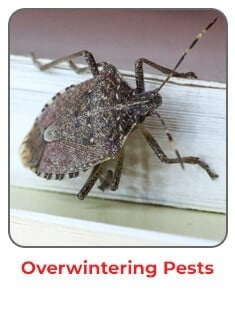 stink bug pest control