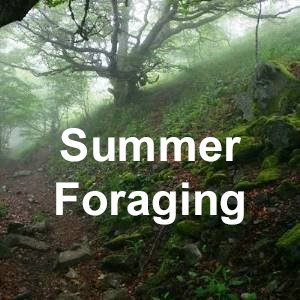 Summer Foraging with Puck's Plenty