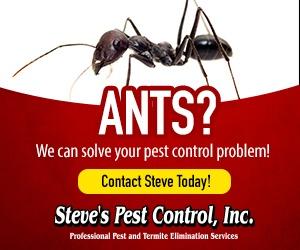 Steve's pest control Ants Invasion Service