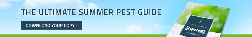summer pest guide for houston
