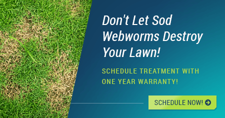 houston sod webworm treatment