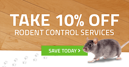 houston rodent control promo