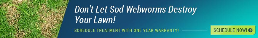 houston sod webworm treatment