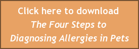 Click here to download  The Four Steps to  Diagnosing Allergies in Pets